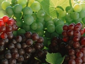 吃葡萄有什么好处,葡萄的功效与作用及营养价值