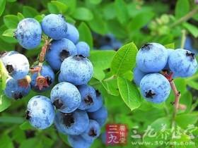 蓝莓的功效与作用及营养价值