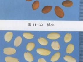 桃仁的功效与作用及禁忌,桃仁的用量用法,中药桃仁图片