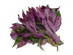 紫背天葵的功效与作用,紫背天葵图片