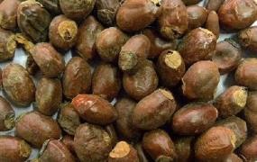 荔枝核的功效与作用及禁忌,荔枝核的药用价值