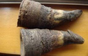 犀角的功效与作用及禁忌,中药犀牛角图片