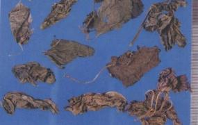 紫苏的功效与作用及食用方法,中药紫苏叶图片