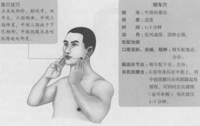 颊车的准确位置图,颊车穴的功效与作用