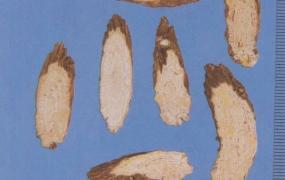 银柴胡的功效与作用,银柴胡和柴胡的区别,中药银柴胡图片