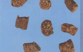 胡黄连的功效与作用及禁忌,胡黄连与黄连的区别,中药胡黄连图片