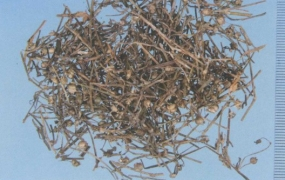 白花蛇舌草的功效与作用,中药白花蛇舌草图片