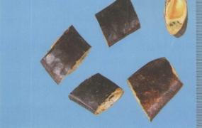 皂荚的功效与作用及禁忌,中药皂荚图片