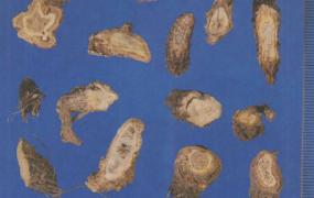前胡的功效与作用及禁忌,中药前胡图片