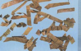 枇杷叶的功效与作用及禁忌,中药枇杷叶图片