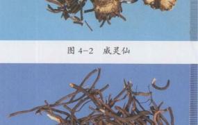 威灵仙的功效与作用及禁忌,中药威灵仙图片