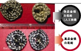 白花蛇的功效与作用及禁忌,中药白花蛇图片