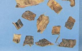 川楝子的功效与作用及禁忌,中药苦楝皮、川楝子图片