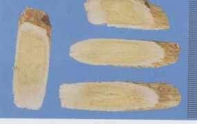 黄芪的功效与作用及禁忌,中药黄芪图片