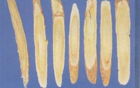 黄芪桂枝五物汤加减治疗血痹之症