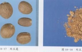 肉豆蔻的功效与作用及禁忌,中药肉豆蔻图片
