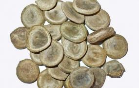 番木鳖(马钱子)的功效与作用,中药番木鳖图片