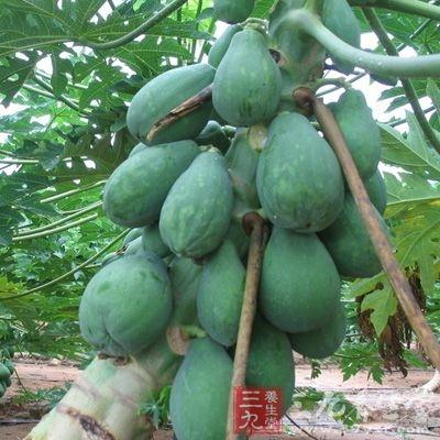 木瓜营养丰富,味道清甜、肉质软滑、多汁,既可生吃,又可作菜