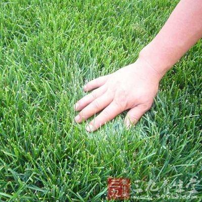 麦冬黄芪泡水喝的功效之润喉