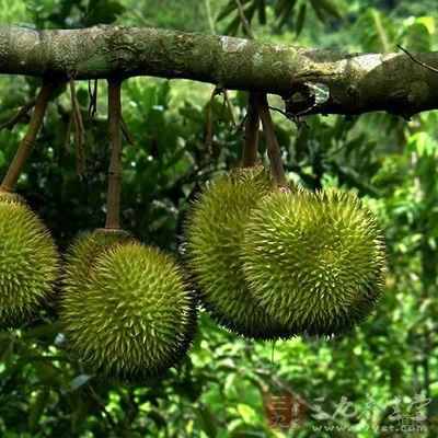 榴莲是人们都很喜欢吃的水果之一