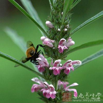 很多治疗妇科病的药品中还用益母草的成分