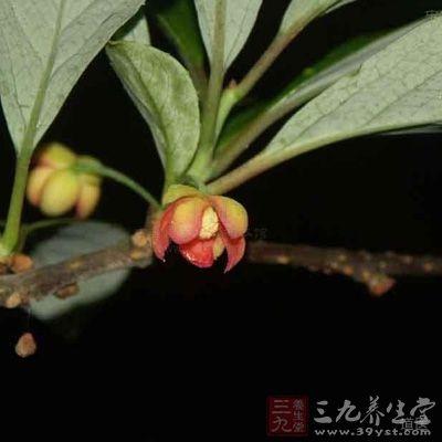 五味子俗称山花椒、秤砣子、药五味子、面藤、五梅子等