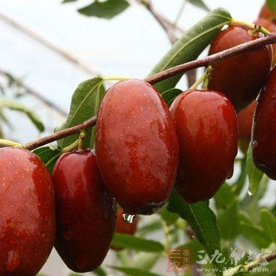 红枣含多种三该类化合物,其中烨木酸、山植酸均发现有抗癌活性,对肉瘤S-180有抑制作用