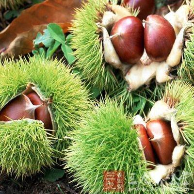 栗子含有大量的淀粉和丰富的蛋白质、脂肪、维生素