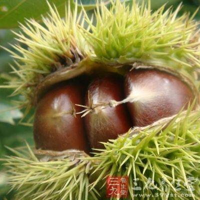 板栗是中国栽培最早的果树之一,已约有2000~3000年的栽培历史