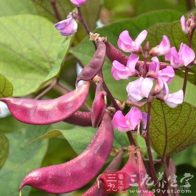 扁豆是我们生活中常吃的一种蔬菜,它的营养丰富