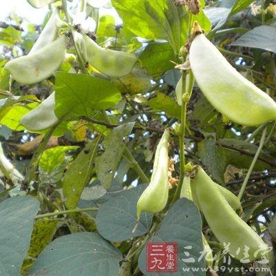 扁豆功能健脾化和中,有利于暑湿邪气的祛除