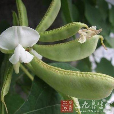 扁豆品种较多,多以嫩荚供食用