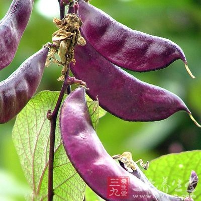 在扁豆中可分出两种不同的植物凝集素