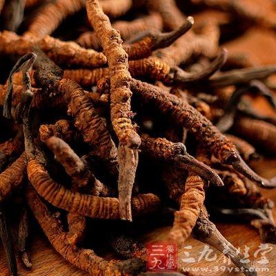 冬虫夏草可以降低血液中的胆固醇和甘油三酯