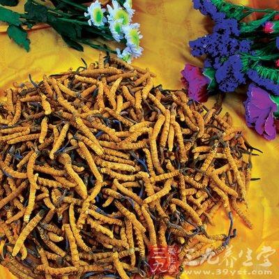 因冬虫夏草属甘温之品,凡外感发热、湿热内盛者不宜吃