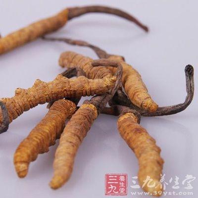 冬虫夏草的服用量取决于各人的身体状况