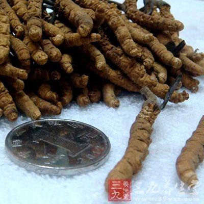 冬虫夏草花的菌种来源于蛹冬虫夏草