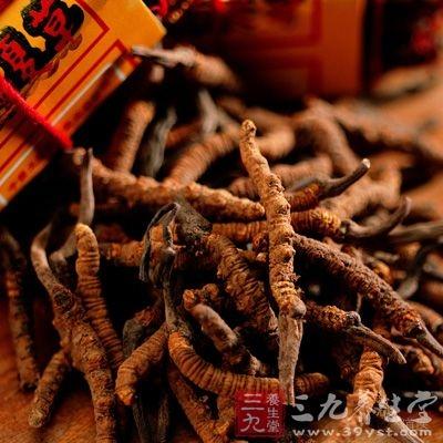 冬虫夏草属于补品,可以增加免疫力