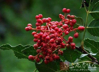 花椒别名檓、大椒、秦椒、蜀椒、川椒,大红袍或山椒