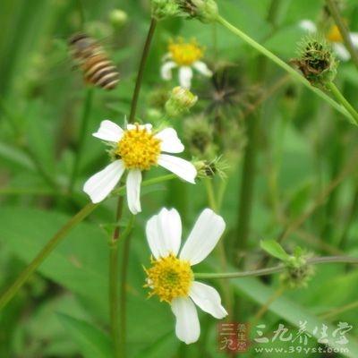 花粉能增强造血功能