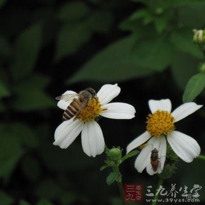 花粉能激活免疫系统,增强免疫力