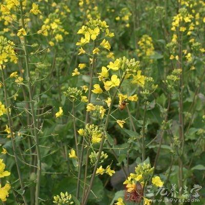 花粉对贫血有良好的疗效