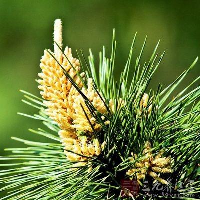 雀斑,粉刺,肝脏疾病者,同时服用松花粉加维生素C有良好的效果