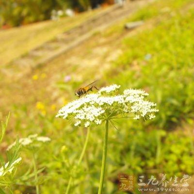 花粉含有丰富的蛋白质、氨基酸、维生素和微量元素等营养物质
