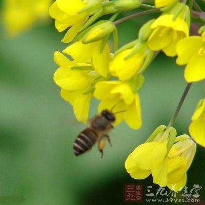 据国外资料报道,在巴黎,90%的名模用花粉美容