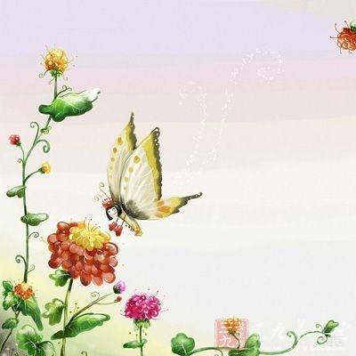 花粉富含多种氨基酸、蛋白质、维生素以及生物活性物质