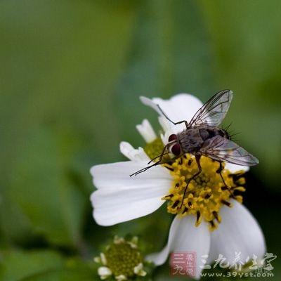 风媒花是以风为媒介进行传播的花粉,是最主要的罪魁祸首之一