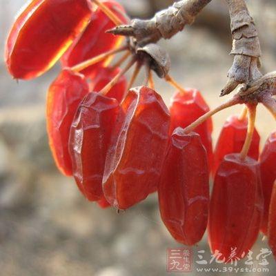 不同剂量山茱萸对醋酸引起的大鼠腹腔毛细血管通透性增加均有明显抑制作用