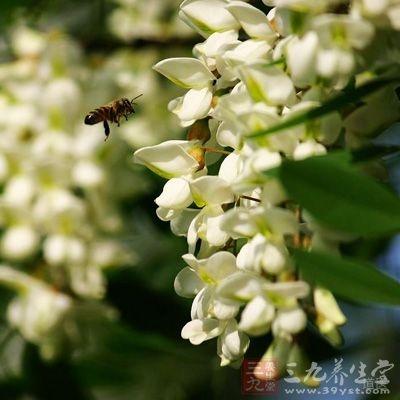 采一些半开的槐花,花瓣大开了不好吃