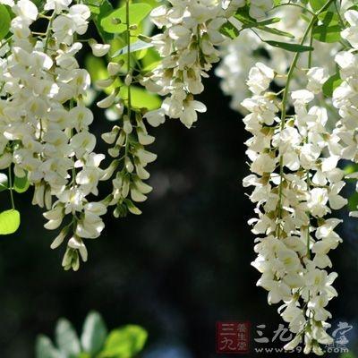 槐花、槐角各等分(炒香黄)